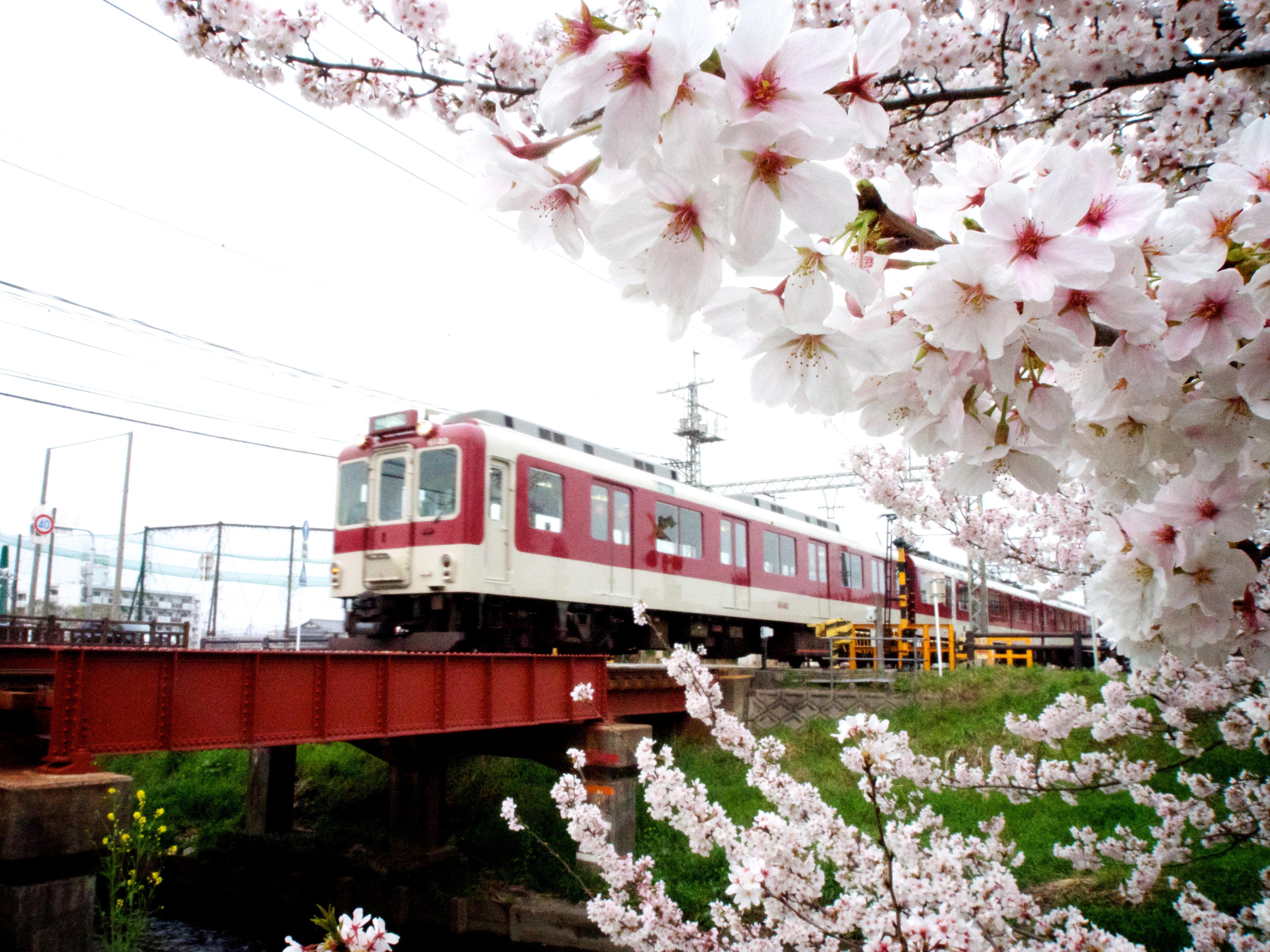 桜と近鉄電車