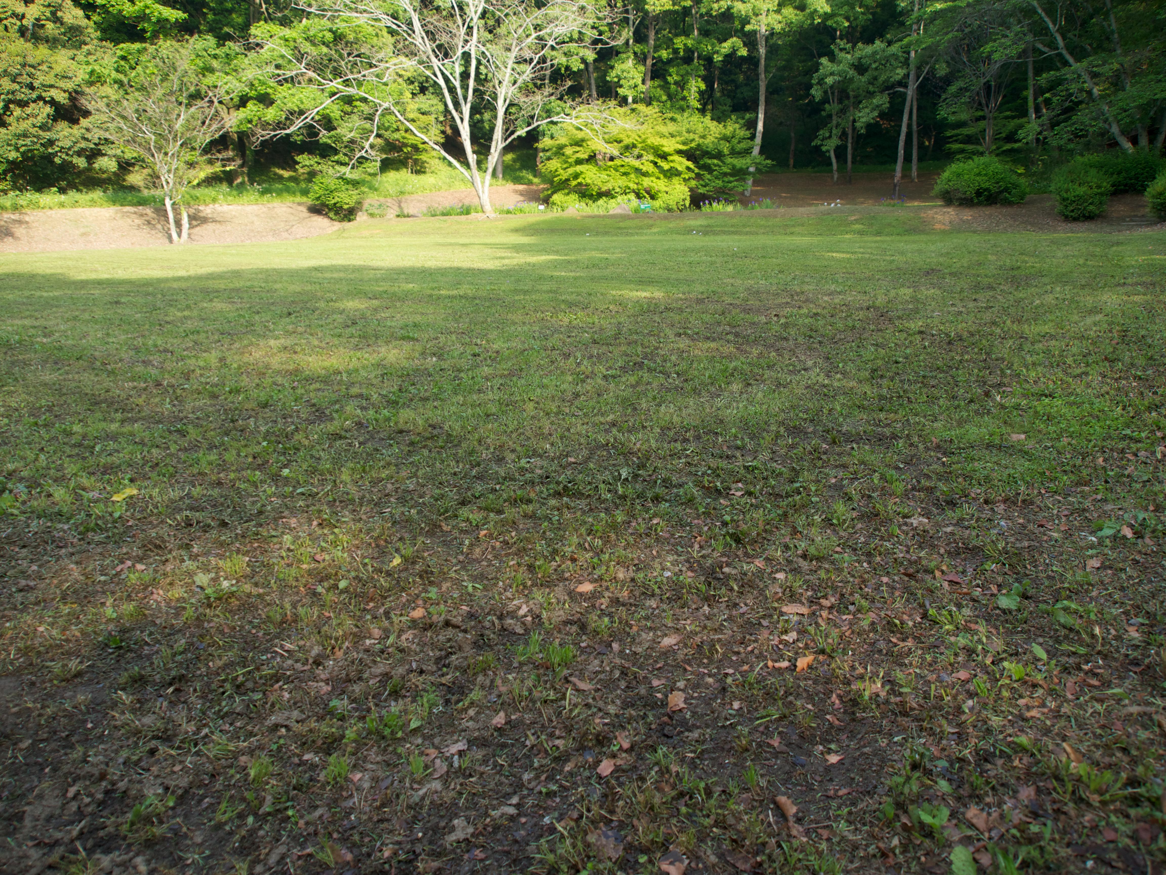 草が刈られた広場
